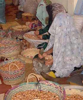 Pour la sauvegarde de l'arganier au Maroc